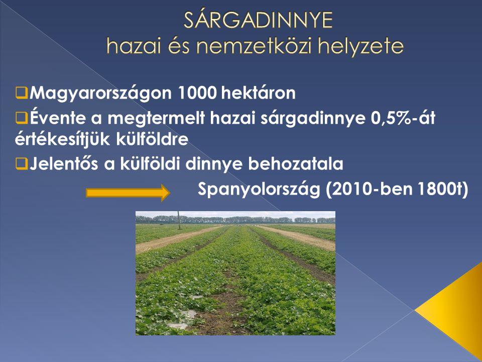  Magyarországon 1000 hektáron  Évente a megtermelt hazai sárgadinnye 0,5%-át értékesítjük külföldre  Jelentős a külföldi dinnye behozatala Spanyolo