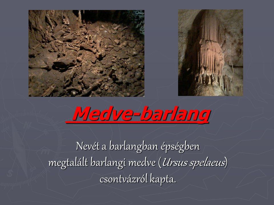 Medve-barlang Medve-barlang Nevét a barlangban épségben megtalált barlangi medve (Ursus spelaeus) csontvázról kapta.