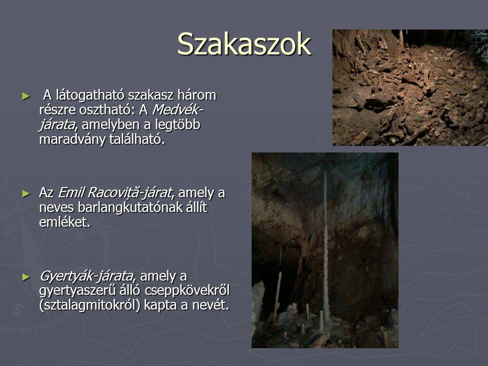 Szakaszok ► A látogatható szakasz három részre osztható: A Medvék- járata, amelyben a legtöbb maradvány található. ► Az Emil Racoviță-járat, amely a n