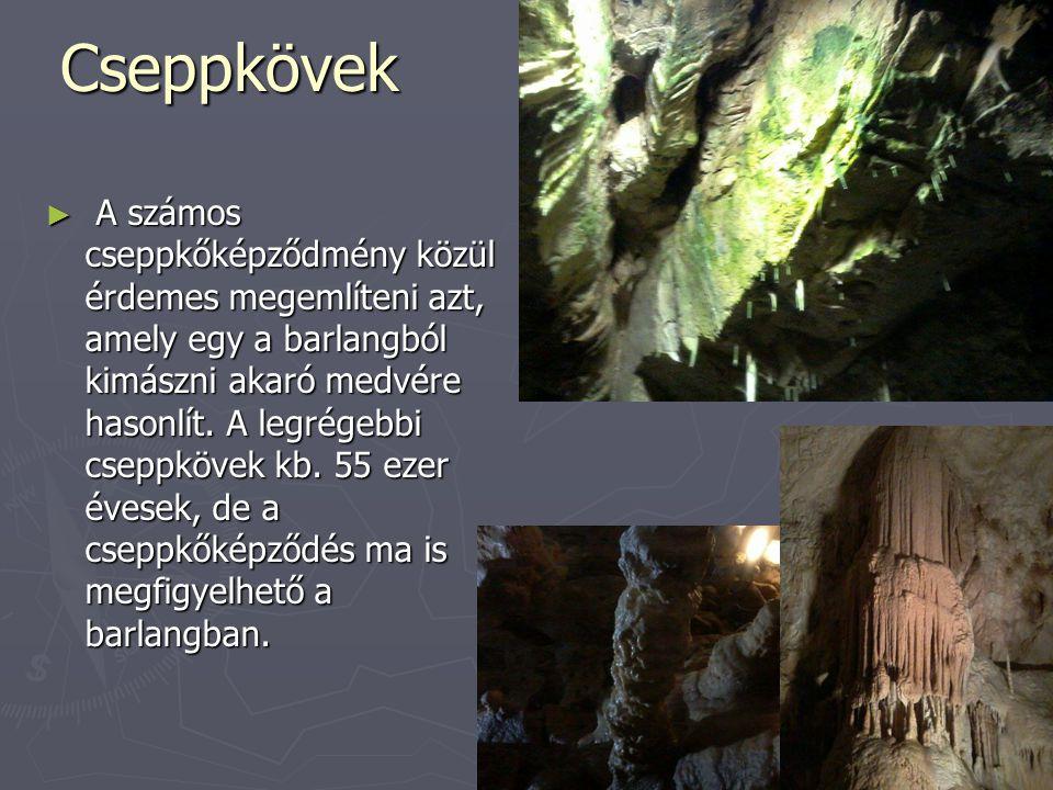 Cseppkövek ► A számos cseppkőképződmény közül érdemes megemlíteni azt, amely egy a barlangból kimászni akaró medvére hasonlít. A legrégebbi cseppkövek