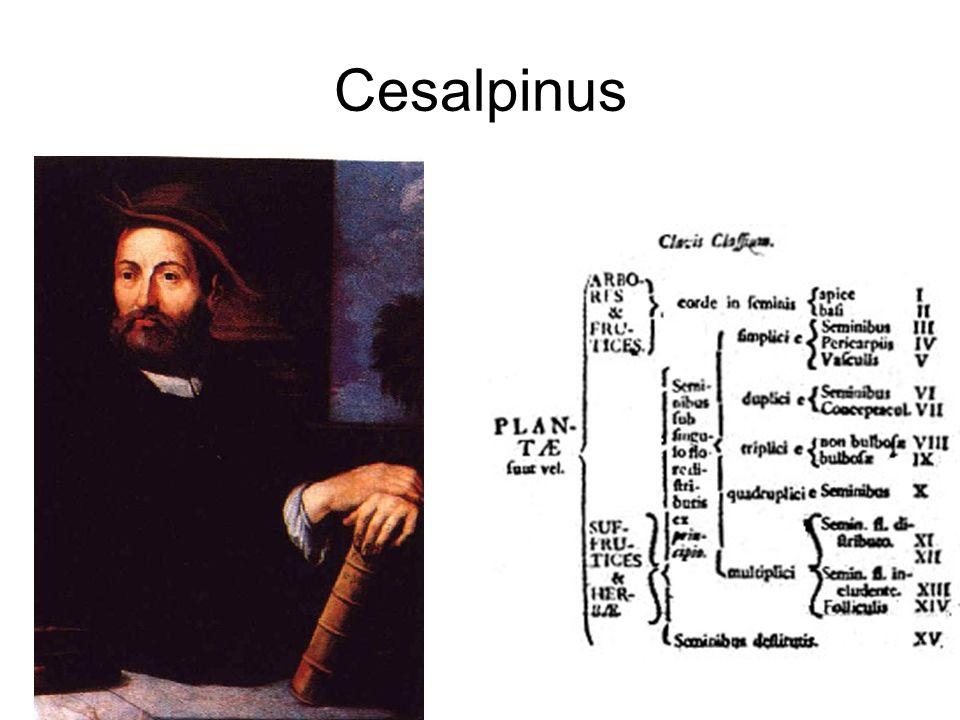 Cesalpinus