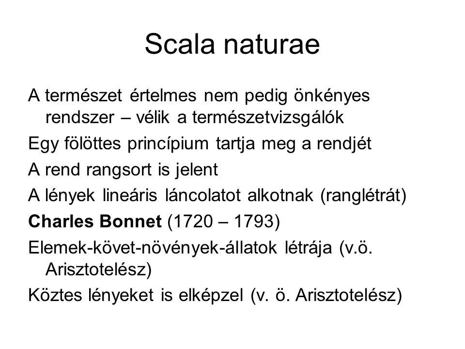 Scala naturae A természet értelmes nem pedig önkényes rendszer – vélik a természetvizsgálók Egy fölöttes princípium tartja meg a rendjét A rend rangsort is jelent A lények lineáris láncolatot alkotnak (ranglétrát) Charles Bonnet (1720 – 1793) Elemek-követ-növények-állatok létrája (v.ö.