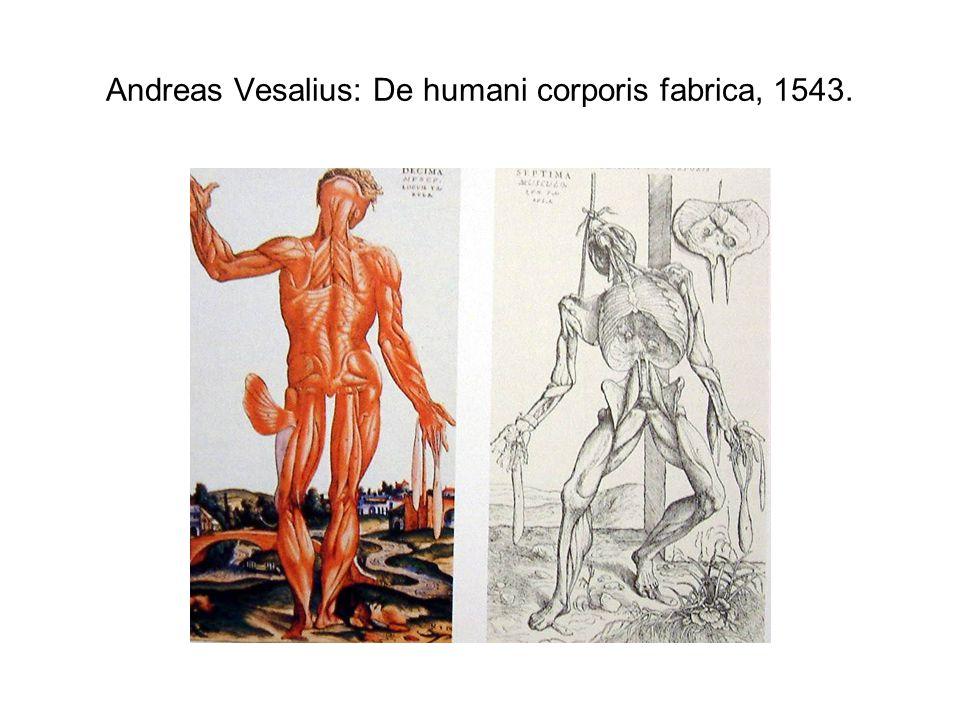 Andreas Vesalius: De humani corporis fabrica, 1543.