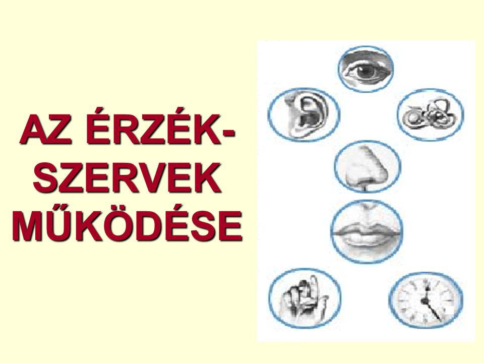 AZ ÉRZÉK- SZERVEK MŰKÖDÉSE