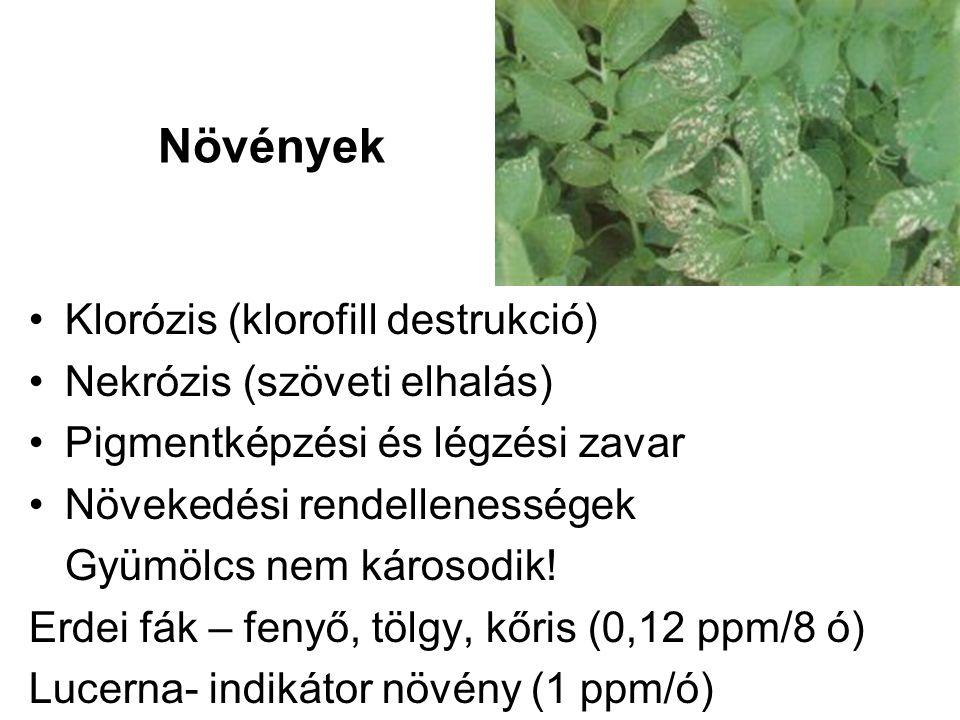 Klorózis (klorofill destrukció) Nekrózis (szöveti elhalás) Pigmentképzési és légzési zavar Növekedési rendellenességek Gyümölcs nem károsodik.