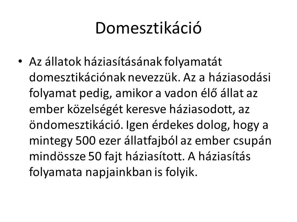 Domesztikáció Az állatok háziasításának folyamatát domesztikációnak nevezzük. Az a háziasodási folyamat pedig, amikor a vadon élő állat az ember közel