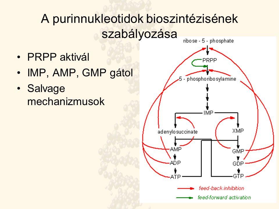 A purinnukleotidok bioszintézisének szabályozása PRPP aktivál IMP, AMP, GMP gátol Salvage mechanizmusok