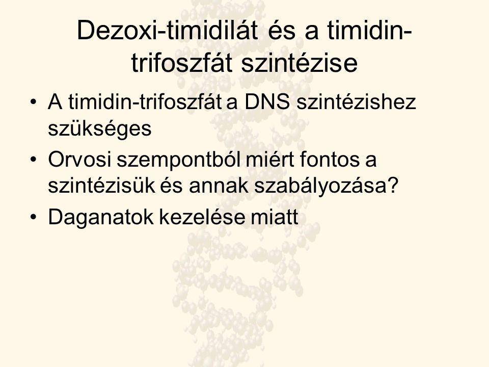 Dezoxi-timidilát és a timidin- trifoszfát szintézise A timidin-trifoszfát a DNS szintézishez szükséges Orvosi szempontból miért fontos a szintézisük é