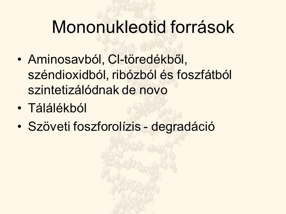 Mononukleotid források Aminosavból, Cl-töredékből, széndioxidból, ribózból és foszfátból szintetizálódnak de novo Tálálékból Szöveti foszforolízis - d