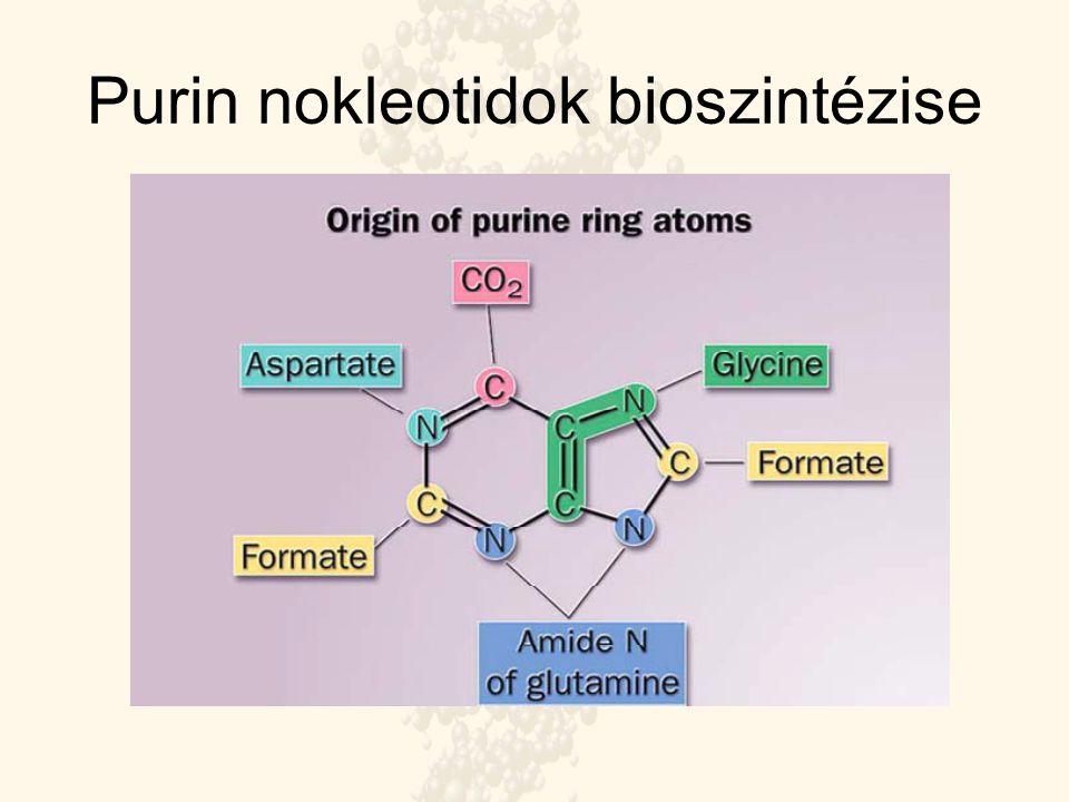 Purin nokleotidok bioszintézise