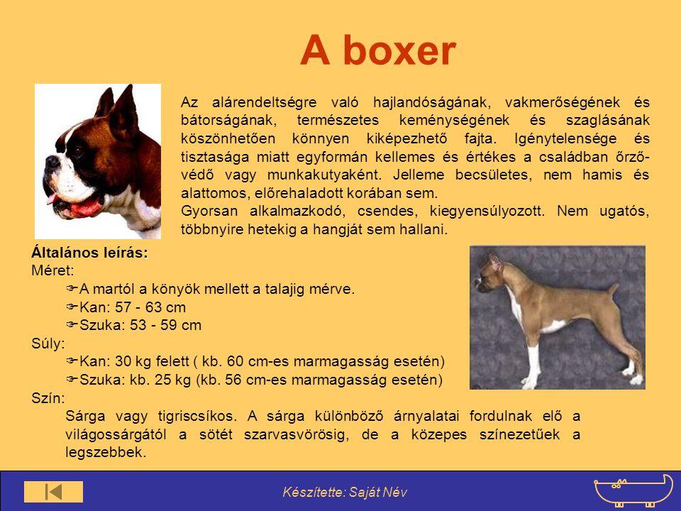 Készítette: Saját Név A csau-csau Tulajdonképpen rendkívül ellentmondásos sokak szerint igazi kutya tulajdonságokkal nem is rendelkezik.