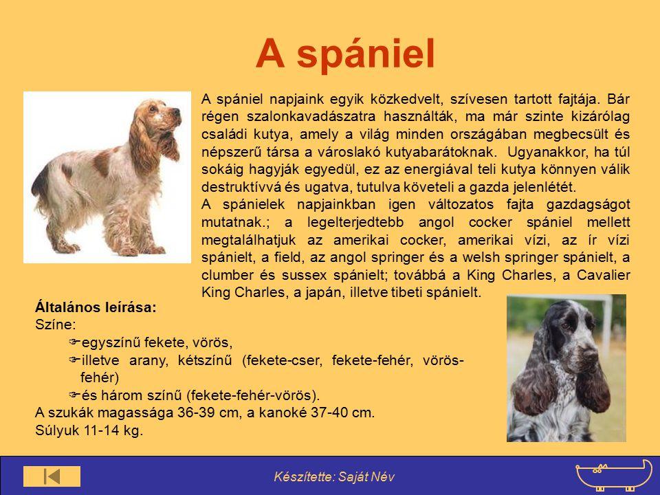 Készítette: Saját Név A spániel A spániel napjaink egyik közkedvelt, szívesen tartott fajtája. Bár régen szalonkavadászatra használták, ma már szinte