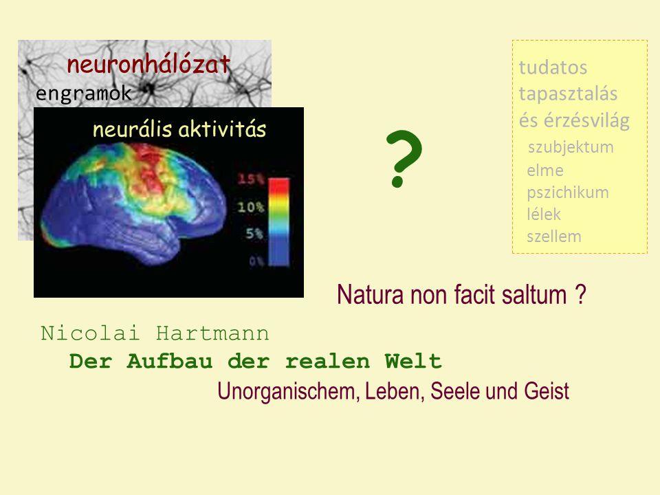 neuronhálózat neurális aktivitás tudatos tapasztalás és érzésvilág szubjektum elme pszichikum lélek szellem engramok ? Nicolai Hartmann Der Aufbau der