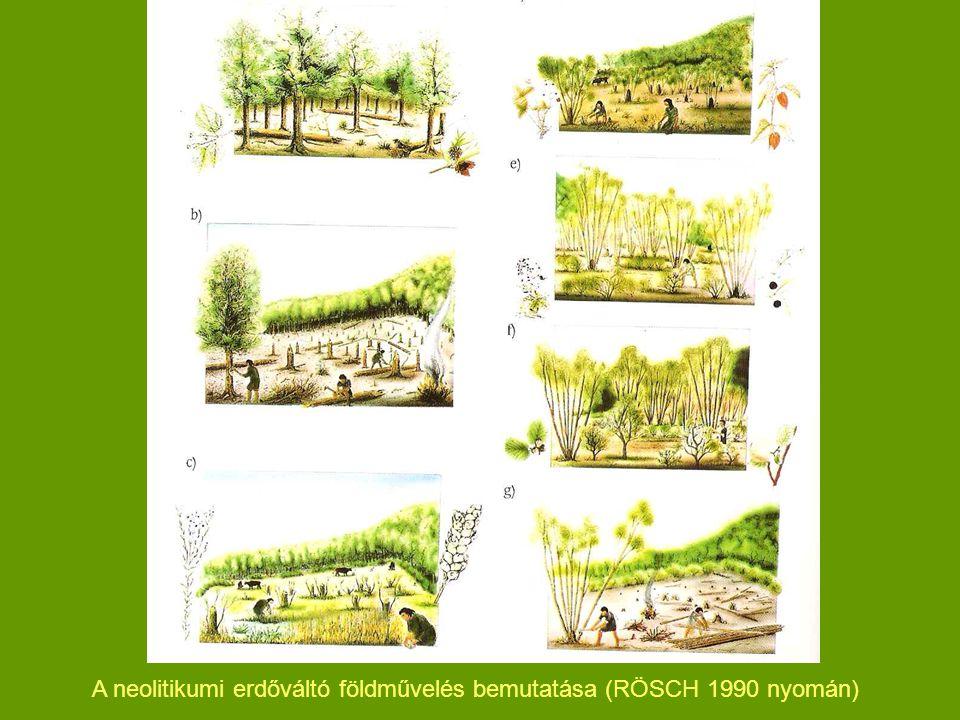 A neolitikumi erdőváltó földművelés bemutatása (RÖSCH 1990 nyomán)