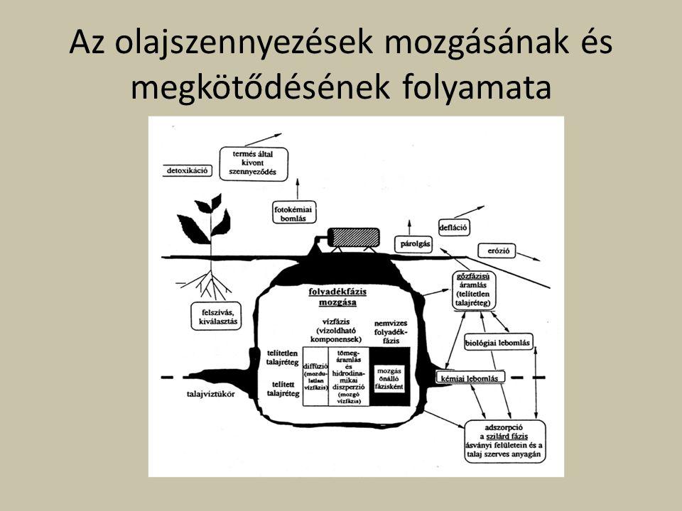 Az olajszennyezések mozgásának és megkötődésének folyamata
