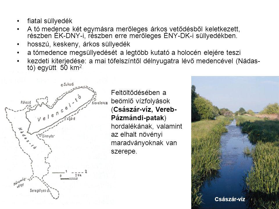 fiatal süllyedék A tó medence két egymásra merőleges árkos vetődésből keletkezett, részben ÉK-DNY-i, részben erre merőleges ÉNY-DK-i süllyedékben.