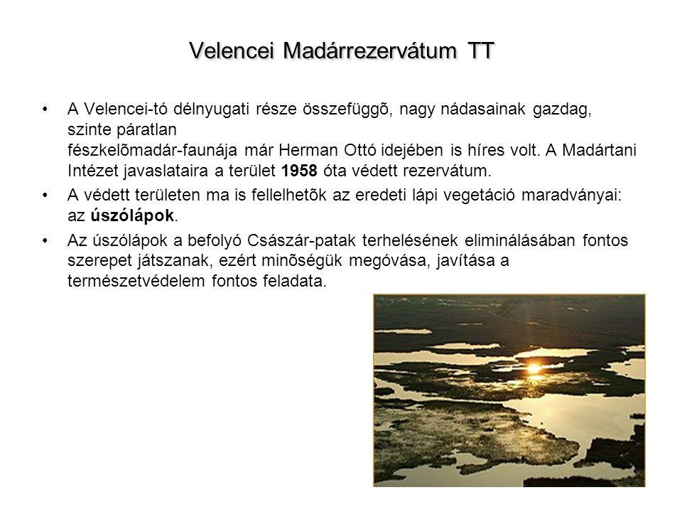 Velencei Madárrezervátum TT A Velencei-tó délnyugati része összefüggõ, nagy nádasainak gazdag, szinte páratlan fészkelõmadár-faunája már Herman Ottó idejében is híres volt.
