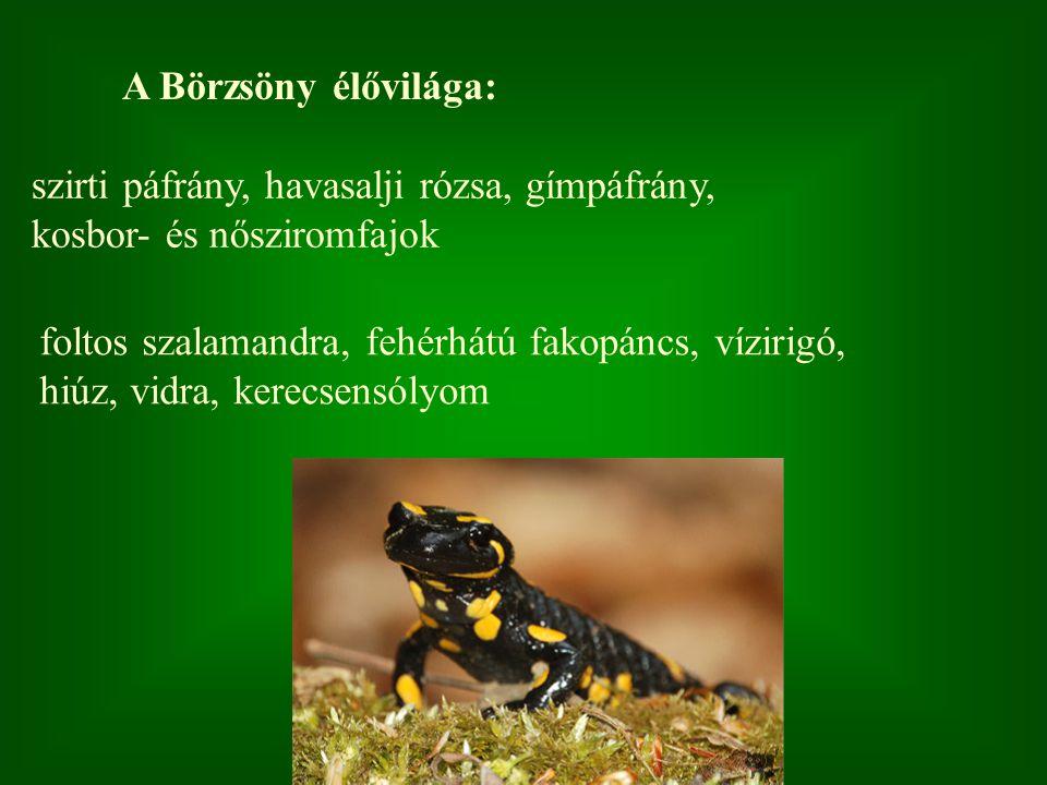 A Börzsöny élővilága: szirti páfrány, havasalji rózsa, gímpáfrány, kosbor- és nősziromfajok foltos szalamandra, fehérhátú fakopáncs, vízirigó, hiúz, v