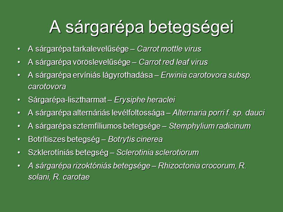 A sárgarépa betegségei A sárgarépa tarkalevelűsége – Carrot mottle virusA sárgarépa tarkalevelűsége – Carrot mottle virus A sárgarépa vöröslevelűsége