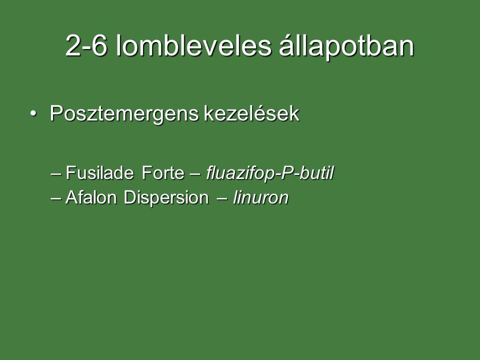 2-6 lombleveles állapotban Posztemergens kezelésekPosztemergens kezelések –Fusilade Forte – fluazifop-P-butil –Afalon Dispersion – linuron