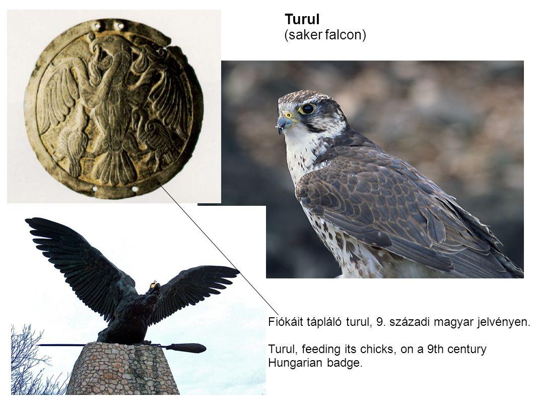 Turul (saker falcon) Fiókáit tápláló turul, 9. századi magyar jelvényen. Turul, feeding its chicks, on a 9th century Hungarian badge.