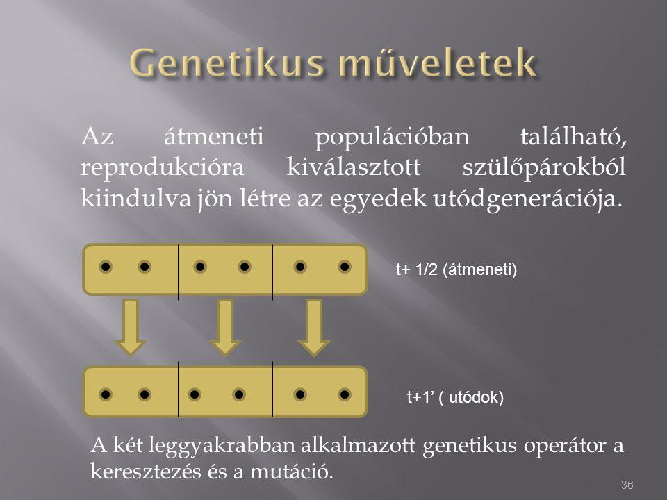 Az átmeneti populációban található, reprodukcióra kiválasztott szülőpárokból kiindulva jön létre az egyedek utódgenerációja. 36 A két leggyakrabban al