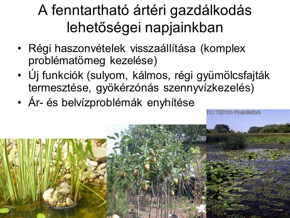 A fenntartható ártéri gazdálkodás lehetőségei napjainkban Régi haszonvételek visszaállítása (komplex problématömeg kezelése) Új funkciók (sulyom, kálmos, régi gyümölcsfajták termesztése, gyökérzónás szennyvízkezelés) Ár- és belvízproblémák enyhítése
