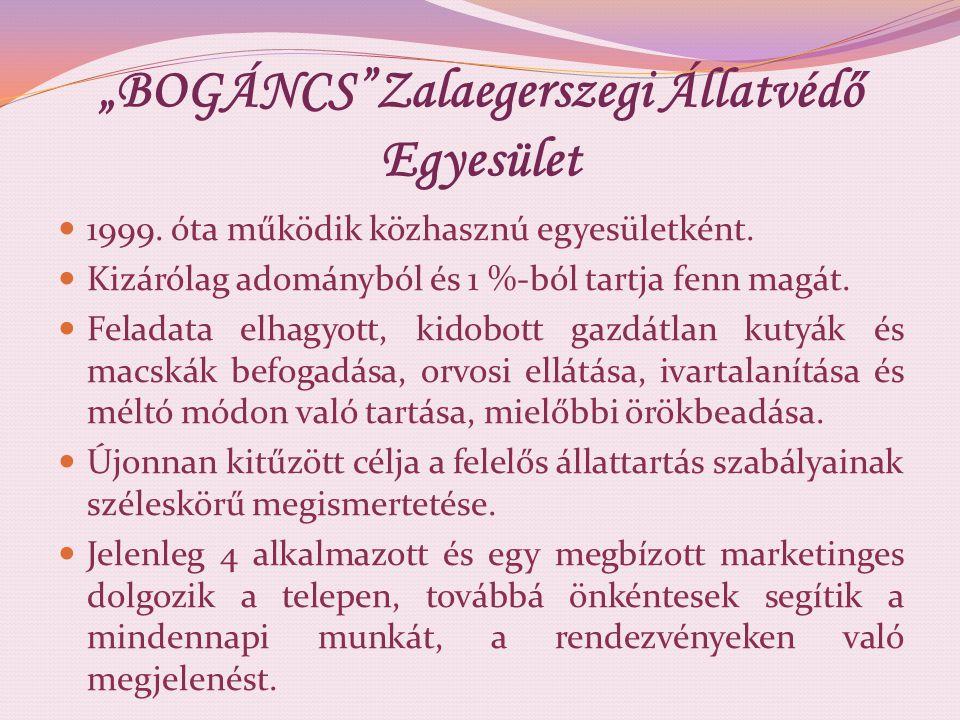"""""""BOGÁNCS""""Zalaegerszegi Állatvédő Egyesület 1999. óta működik közhasznú egyesületként. Kizárólag adományból és 1 %-ból tartja fenn magát. Feladata elha"""