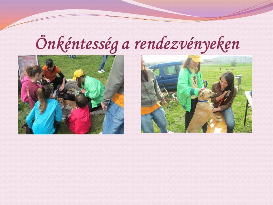 Önkéntesség a rendezvényeken
