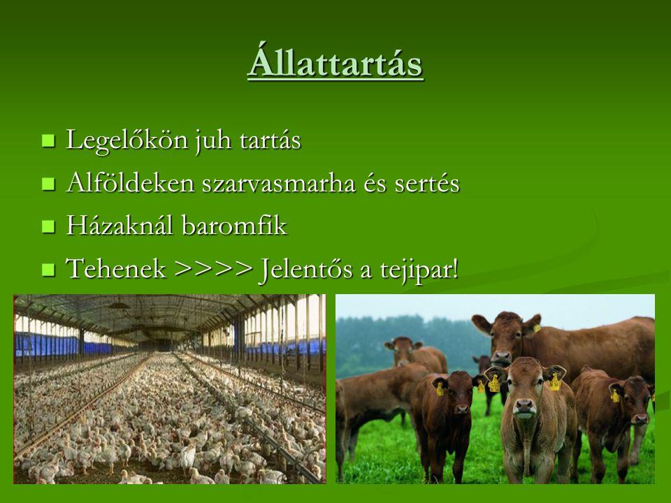 Állattartás Legelőkön juh tartás Legelőkön juh tartás Alföldeken szarvasmarha és sertés Alföldeken szarvasmarha és sertés Házaknál baromfik Házaknál baromfik Tehenek >>>> Jelentős a tejipar.