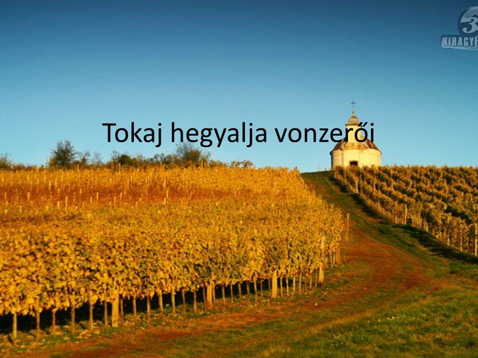 Tokaj hegyalja vonzerői