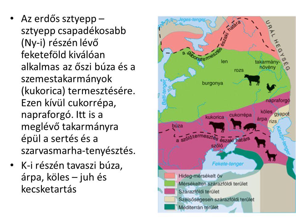 Az erdős sztyepp – sztyepp csapadékosabb (Ny-i) részén lévő feketeföld kiválóan alkalmas az őszi búza és a szemestakarmányok (kukorica) termesztésére.