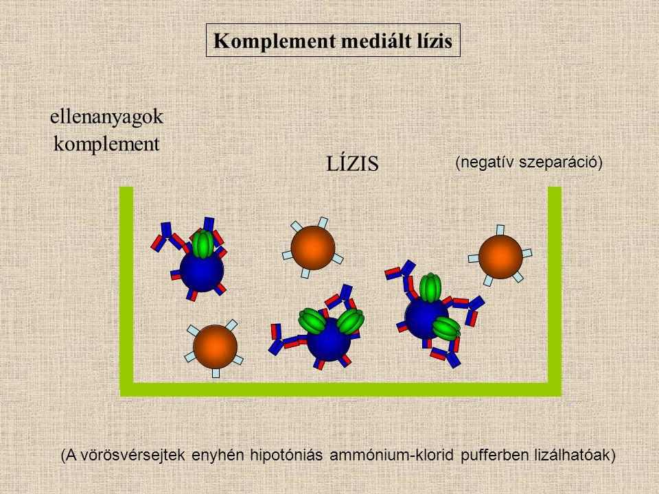 Komplement mediált lízis ellenanyagok komplement LÍZIS (A vörösvérsejtek enyhén hipotóniás ammónium-klorid pufferben lizálhatóak) (negatív szeparáció)