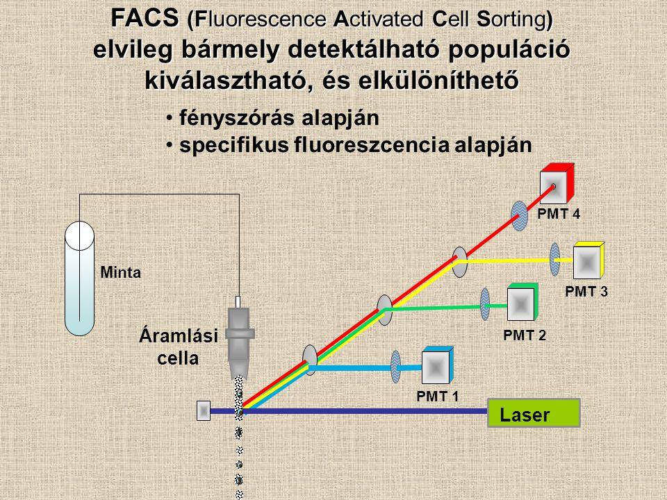 FACS (Fluorescence Activated Cell Sorting) elvileg bármely detektálható populáció kiválasztható, és elkülöníthető PMT 1 PMT 2 PMT 4 Laser Áramlási cel
