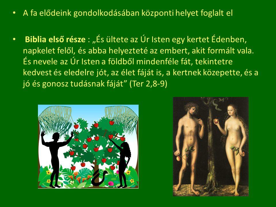 """A fa elődeink gondolkodásában központi helyet foglalt el Biblia első része : """"És ültete az Úr Isten egy kertet Édenben, napkelet felől, és abba helyez"""