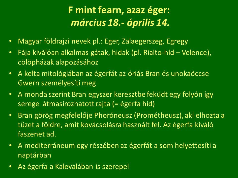 F mint fearn, azaz éger: március 18.- április 14. Magyar földrajzi nevek pl.: Eger, Zalaegerszeg, Egregy Fája kiválóan alkalmas gátak, hidak (pl. Rial