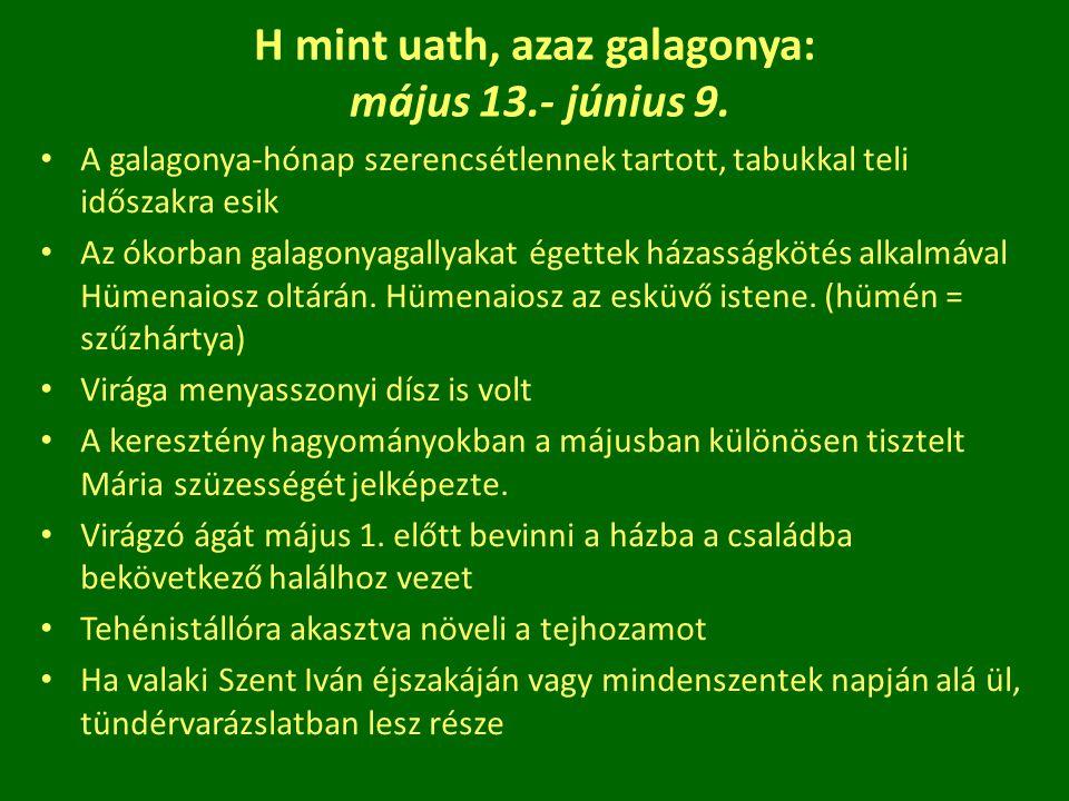 H mint uath, azaz galagonya: május 13.- június 9. A galagonya-hónap szerencsétlennek tartott, tabukkal teli időszakra esik Az ókorban galagonyagallyak
