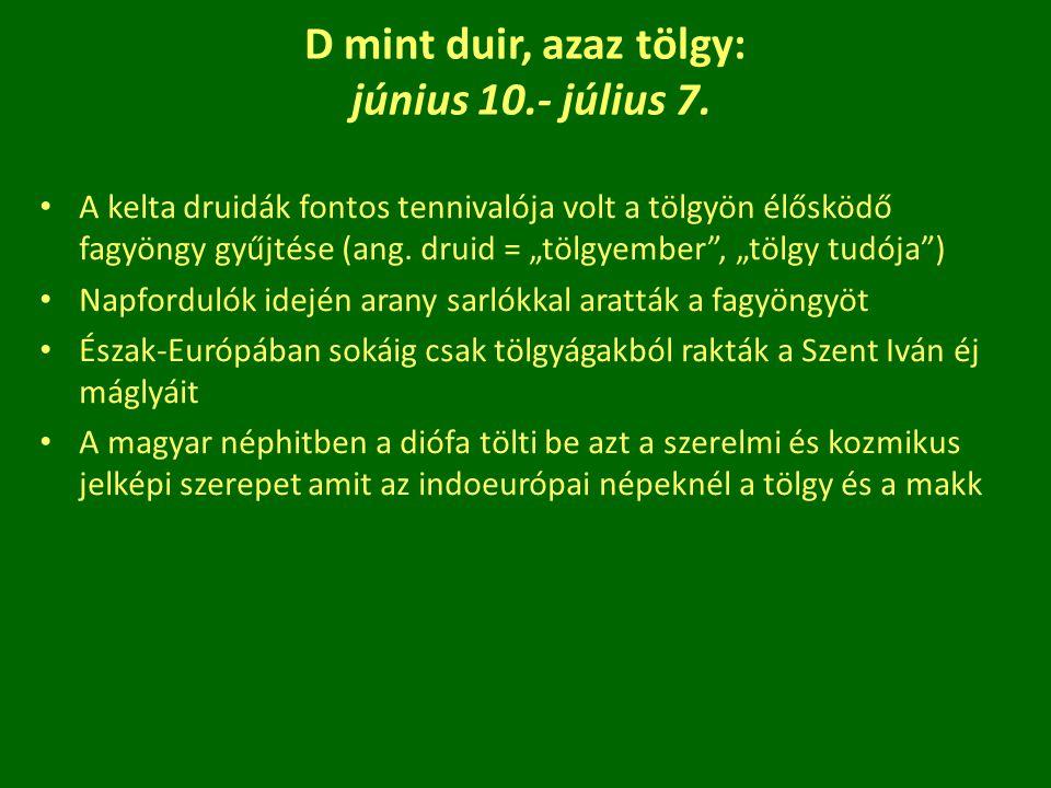 """D mint duir, azaz tölgy: június 10.- július 7. A kelta druidák fontos tennivalója volt a tölgyön élősködő fagyöngy gyűjtése (ang. druid = """"tölgyember"""""""