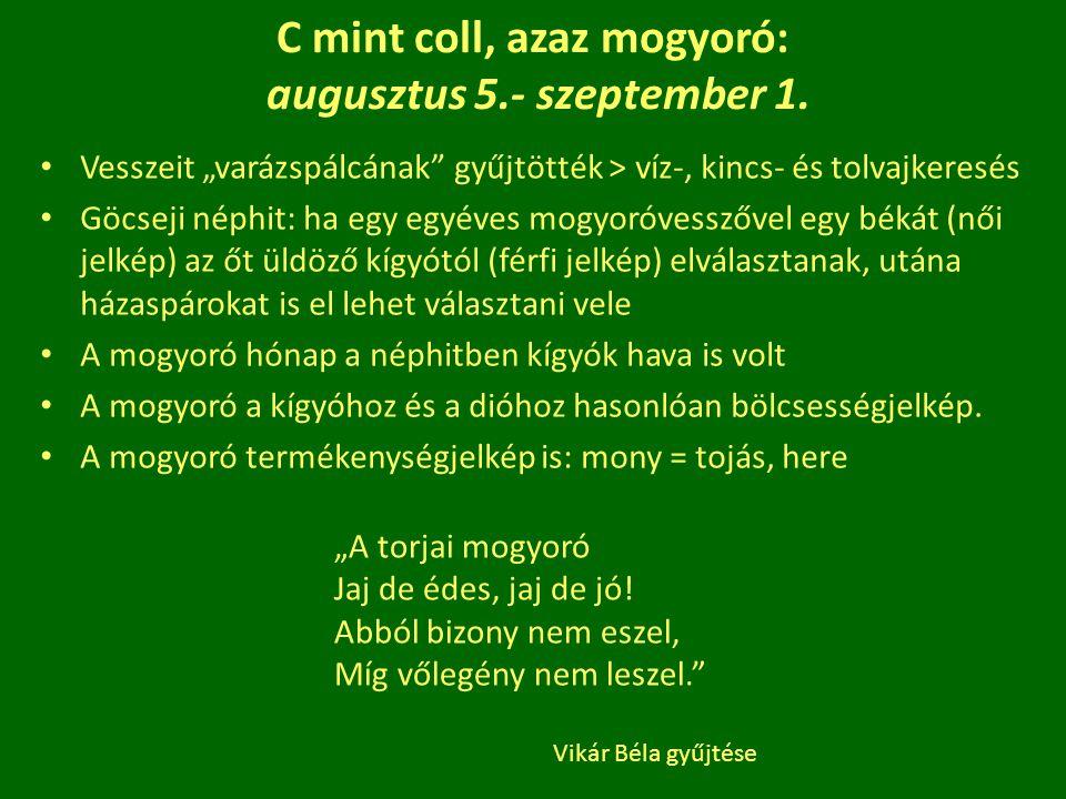 """C mint coll, azaz mogyoró: augusztus 5.- szeptember 1. Vesszeit """"varázspálcának"""" gyűjtötték > víz-, kincs- és tolvajkeresés Göcseji néphit: ha egy egy"""