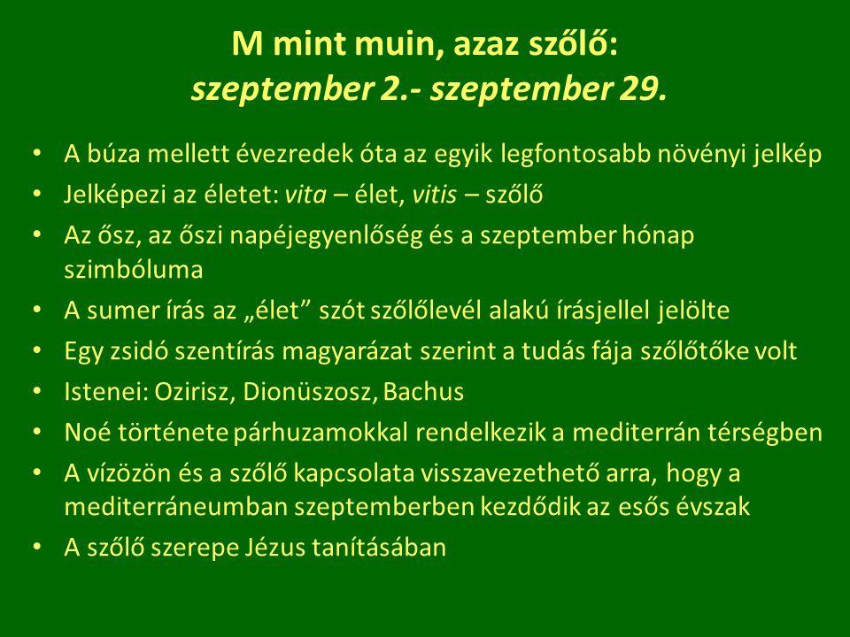 M mint muin, azaz szőlő: szeptember 2.- szeptember 29. A búza mellett évezredek óta az egyik legfontosabb növényi jelkép Jelképezi az életet: vita – é