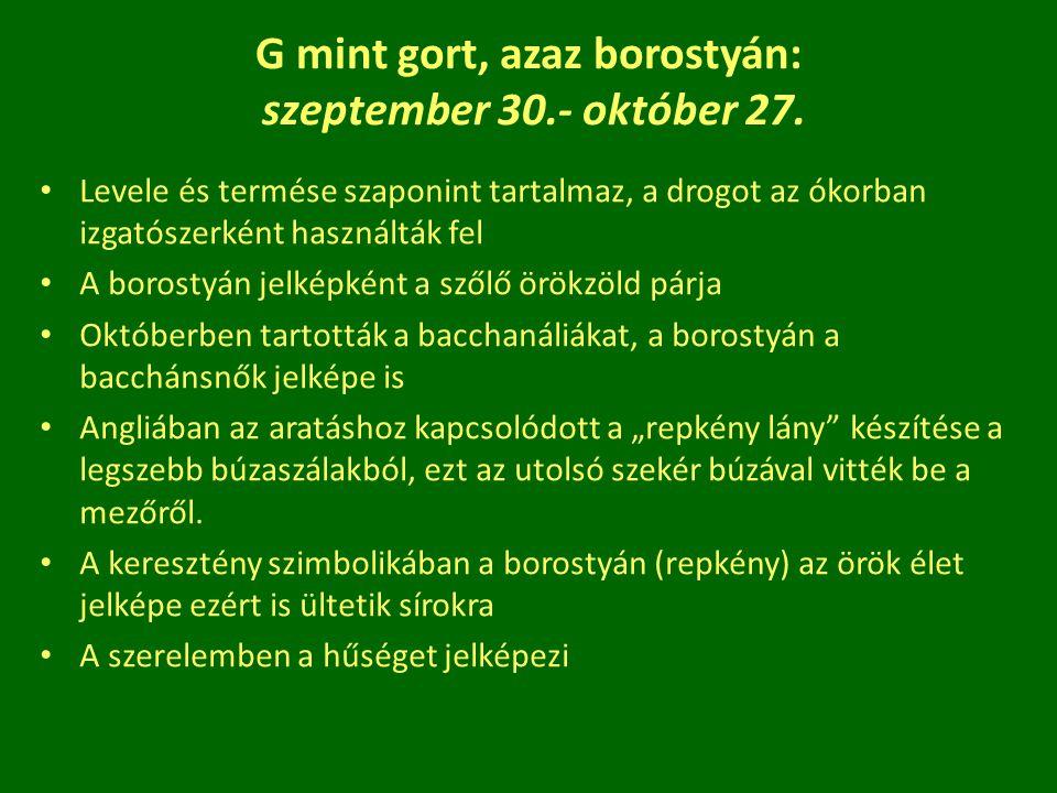 G mint gort, azaz borostyán: szeptember 30.- október 27. Levele és termése szaponint tartalmaz, a drogot az ókorban izgatószerként használták fel A bo
