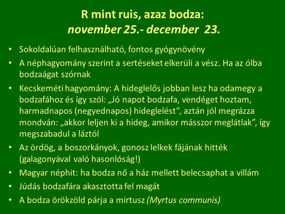 R mint ruis, azaz bodza: november 25.- december 23. Sokoldalúan felhasználható, fontos gyógynövény A néphagyomány szerint a sertéseket elkerüli a vész