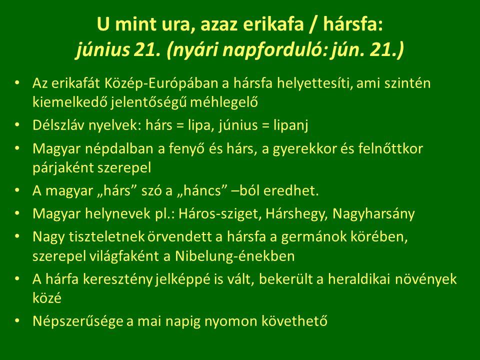 U mint ura, azaz erikafa / hársfa: június 21. (nyári napforduló: jún. 21.) Az erikafát Közép-Európában a hársfa helyettesíti, ami szintén kiemelkedő j