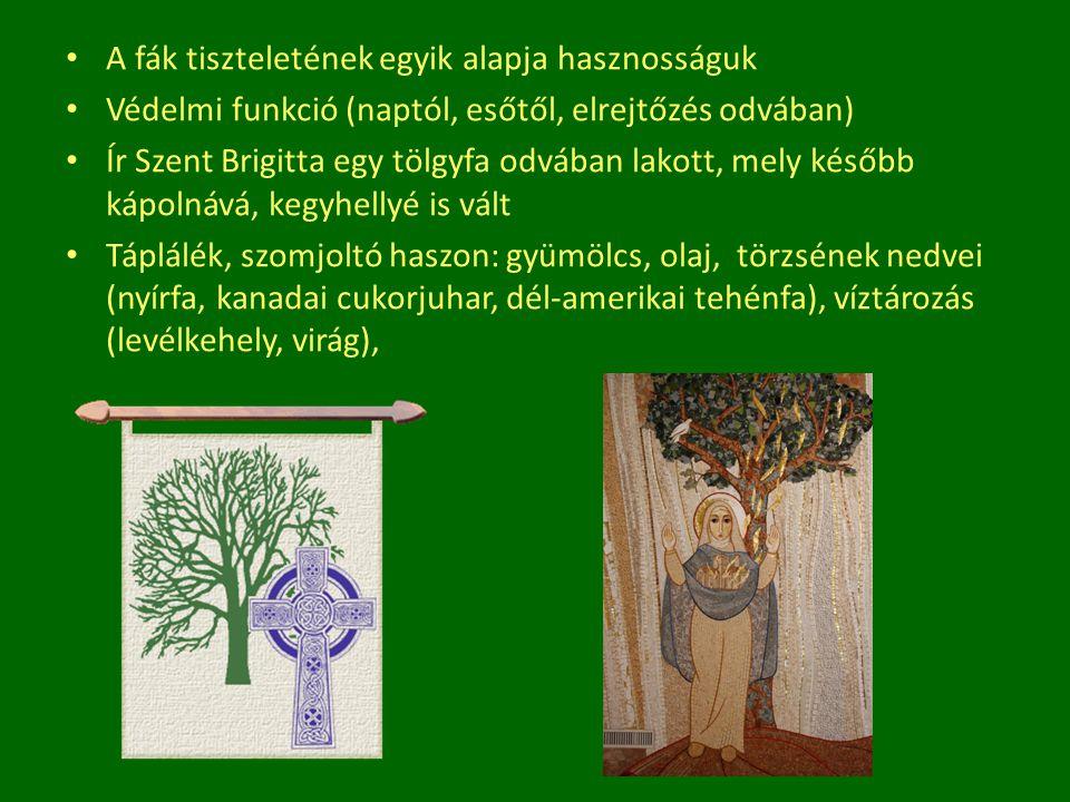 A fák tiszteletének egyik alapja hasznosságuk Védelmi funkció (naptól, esőtől, elrejtőzés odvában) Ír Szent Brigitta egy tölgyfa odvában lakott, mely