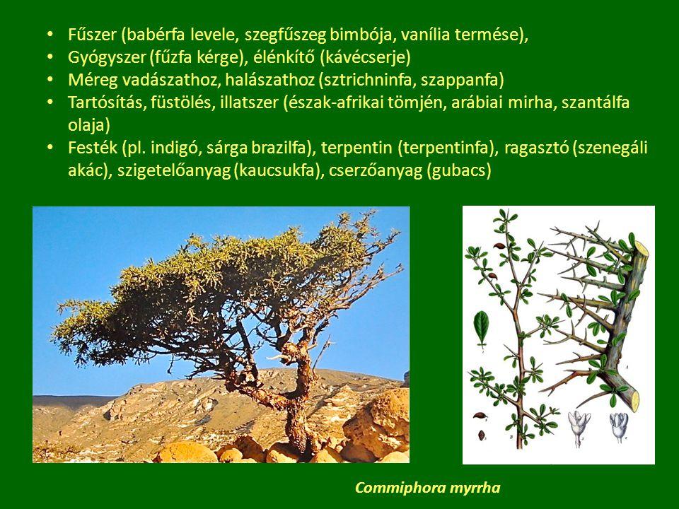 A fa anyagából készült eszközök Az ősi írások jelentős részét fára rótták (bükk – könyv, Buche – Buch, beech – book, buk – bukva) Tűz használata kb.