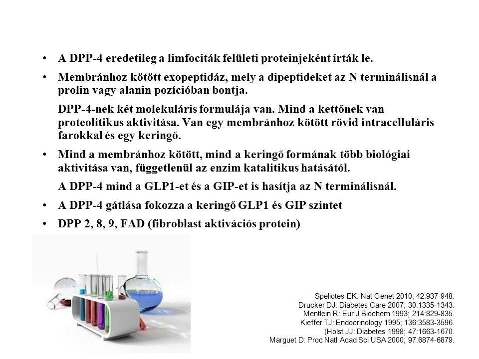 A DPP-4 eredetileg a limfociták felületi proteinjeként írták le.