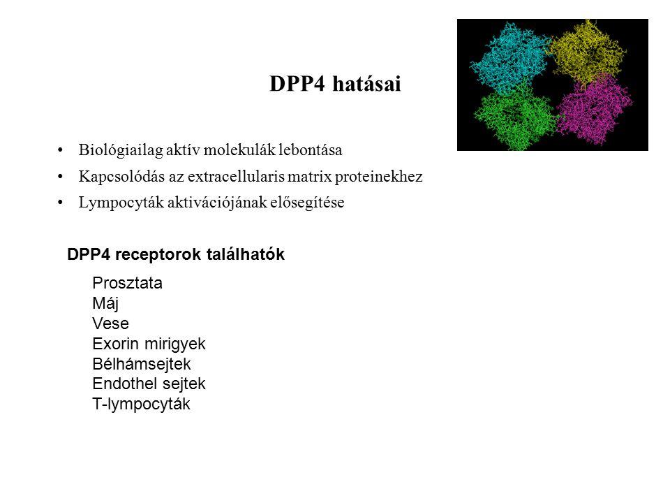 DPP4 hatásai Biológiailag aktív molekulák lebontása Kapcsolódás az extracellularis matrix proteinekhez Lympocyták aktivációjának elősegítése Prosztata Máj Vese Exorin mirigyek Bélhámsejtek Endothel sejtek T-lympocyták DPP4 receptorok találhatók