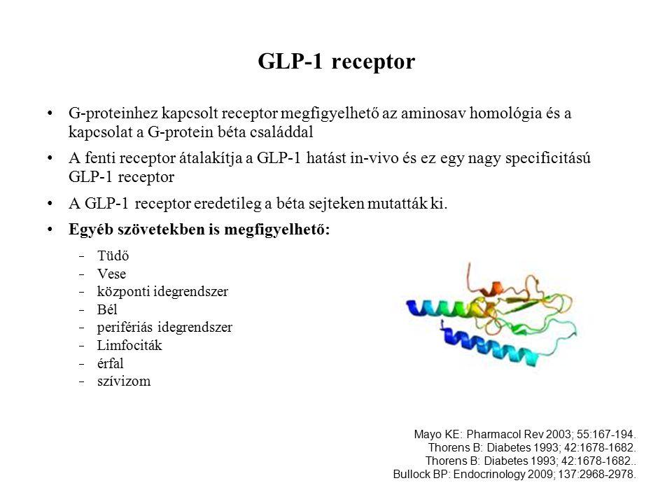 GLP-1 receptor G-proteinhez kapcsolt receptor megfigyelhető az aminosav homológia és a kapcsolat a G-protein béta családdal A fenti receptor átalakítja a GLP-1 hatást in-vivo és ez egy nagy specificitású GLP-1 receptor A GLP-1 receptor eredetileg a béta sejteken mutatták ki.