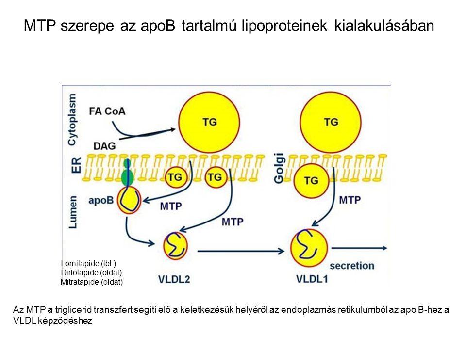 Az MTP a triglicerid transzfert segíti elő a keletkezésük helyéről az endoplazmás retikulumból az apo B-hez a VLDL képződéshez MTP szerepe az apoB tartalmú lipoproteinek kialakulásában Lomitapide (tbl.) Dirlotapide (oldat) Mitratapide (oldat)