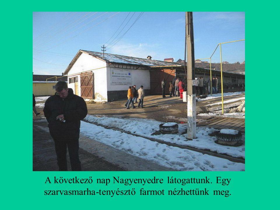 A következő nap Nagyenyedre látogattunk. Egy szarvasmarha-tenyésztő farmot nézhettünk meg.